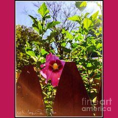 http://fineartameric a.com/featured/-peek-a-boo-marylee-parker.html?newartwork=true sale #Peekaboo# flower