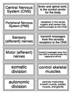 36 Flash Cards covering the Nervous System for Anatomy. These can also be cut separately and used for a matching game.