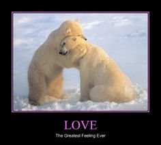 It Can Warm a Chilly Heart. Pinning this simply for the fact that I love Polar Bears.