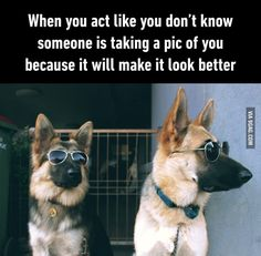 Animal Pictures and Photos: 9GAG (@9GAG) on Twitter