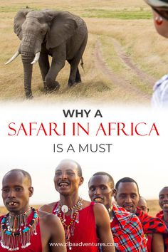 Why an Adventure in Africa on Safari is the Best holiday - Africa Safari Travel Travel Advice, Travel Guides, Travel Tips, Kenya Travel, Africa Travel, Safari Adventure, Adventure Travel, Safari Holidays, Africa Destinations
