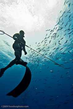 Spearfishing at Yokohama // by Kurt Chambers