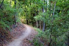 Alpine trail in Portola Valley- We're lucky to live so close to this great place to hike