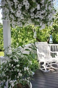 Our guests love to sit out on the back porch to enjoy the sweet smelling flowers and the lovely day....................