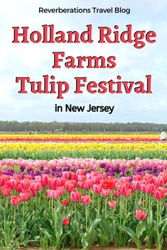 Be transported to the Netherlands with a visit to New Jersey's Holland Ridge Farms Tulip Festival for acres of beautiful tulips! Updates for 2020 Tulip Trail. Us Travel Destinations, Amazing Destinations, Places To Travel, Places To Go, New Jersey, Jersey Girl, East Coast Usa, Travel Usa, Travel Tips