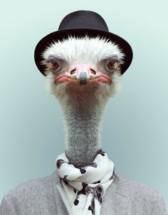 """Blik Decal 28""""x34"""", for washer requires 1"""" cut from height, 2"""" from width; $30. Zoo Portraits: Ostrich"""