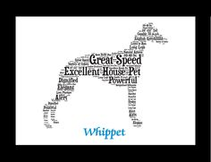 Traits of the Whippet Whippets were used by peasants for poaching rabbits and…