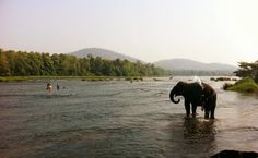 Kodanad Elephant Sanctuary