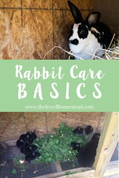 Rabbit Care Basics for the Beginner