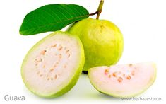 Guavas are a widely consumed fruit because of their sweet taste. Its leaves and bark are also full of nutrients and health benefits. How To Eat Guava, Guava Benefits, Health Benefits, Health Tips, Guava Fruit, Guava Tree, Vitamin C Tablets, Guava Leaves, Fruit Nutrition