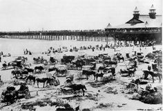 Long Beach Pier and beach crowded with horses and carriages, :: California Historical Society Collection, Long Beach Pier, Long Beach California, California History, Vintage California, Southern California, Hotel California, Vintage Beach Photos, Vintage Images, Seal Beach