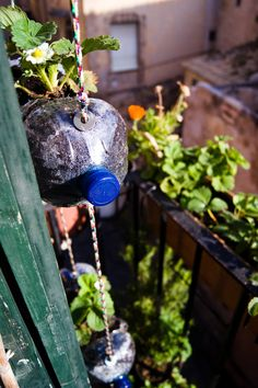Cómo hacer paso a paso un pequeño huerto vertical con botellas... En éste caso han plantado fresas, el espacio de una botella es más que suficiente para ellas