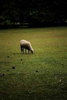 Serralves farm © Mónica Pinto