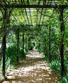 Noble Spanish Family Restores Its Ancestral Home Roses and wisteria blanket a pergola that leads to the swimming pool Pergola Swing, Pergola Patio, Backyard, Rustic Pergola, Pergola Plans, Pergola Ideas, Arco Floral, Porches, Permaculture