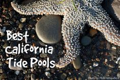 Explore the best tide pools in California with your kids in tow. From South to North, we are sharing our favorite spots to find sea creatures.