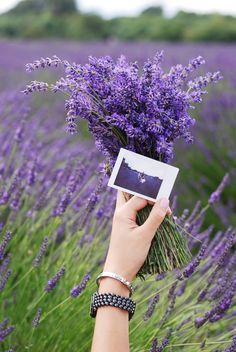 Mayfield is a beautiful lavender field that is only a stone's throw away from London!
