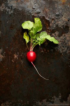 radish by ivana jurcic - eat Fruit And Veg, Fruits And Vegetables, Image Fruit, Ivana, Vegetables Photography, Dark Food Photography, Food Illustrations, Raw Food Recipes, Food Pictures