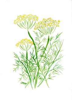 Dill art  print of  original watercolor painting , in green and Yellow , Plants, Botanical herb, mothers day, cottage chic, kitchen decor
