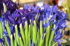 Irises at Seattle's Pike Place Market