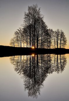 "♂ Amazing nature ""Perfect Reflection"" by Audun Bakke Anderson #tree #water #reflection"