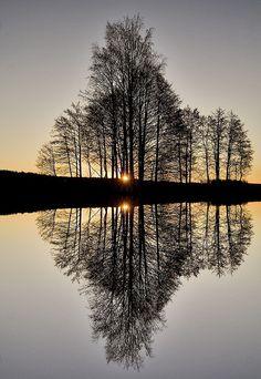 "♂ Amazing nature ""Perfect Reflection"" by Audun Bakke Anderson #tree #water #reflection"