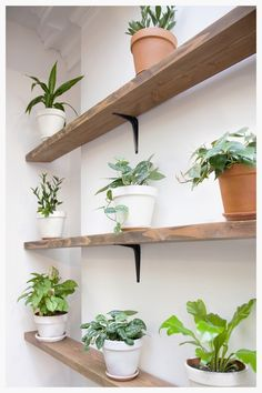 """A closer look at the """"Plant Wall"""" for Kitchensurfing's NYC office designed by Dani Arps with potted plants from The Sill (thesill.com)"""
