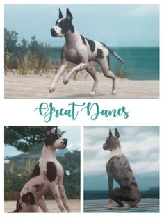 Great Danes Dog for The Sims 4