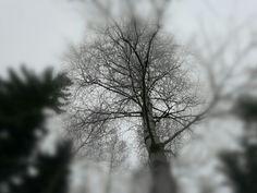 Talvinen hetki...