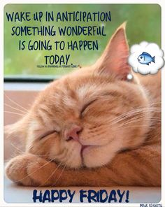 Dream it | Wake up Happy | Good | Great day | Wonderful day | Live it | Accomplish it | Make it happen | Positivity | animal cute quote | Cute cat | Wish it to you:  Wake up in anticipation that something wonderful is going to happen today.  Happy Friday! Happy Weekend!