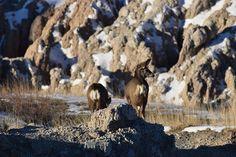 Badlands National Park, South Dakota, deer   Recap of our short visit during our road trip