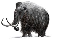 Woolly Mammoth Skeleton May Revise Experts' Timeline of Early America