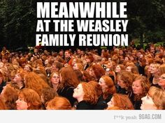 Meanwhile at the Weasley family reunion (funny,harry potter,weasleys,lol) Must Be A Weasley, Ron Weasley, Weasley Twins, Harry Potter Puns, Harry Potter World, Harry Potter Deleted Scenes, Harry Potter Imagines, Harry Potter Cast, Yer A Wizard Harry