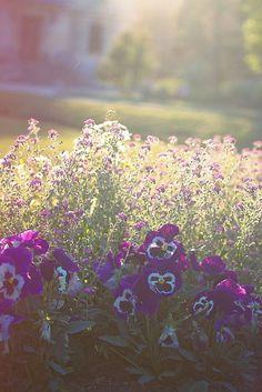 tinywhitedaisies: (via jardin-des-plantes | Flickr - Photo Sharing!)❤️