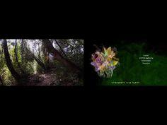 The Botanical Mind - Camden Arts Centre digital project