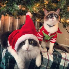 """We're elves."" 