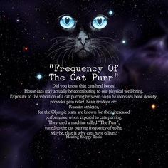 """The Frequency Of The Cat Purr. The Olympic Russian Athletes use the Frequency """"Cat Purr"""" to increase their performance. Animal Facts, Cat Facts, Crazy Cat Lady, Crazy Cats, Didgeridoo, Mystique, Spirit Animal, Cool Cats, Cats And Kittens"""