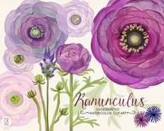 Watercolor purple lavender ranunculus flowers hand painted bouquet florals clip art wedding invitation buttercups party stationery (5.85 USD) by GrafikBoutique