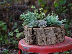 Studio Choo Valentine's Day Shop, succulent planter