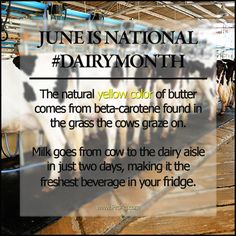 National Dairy Month is June: More Friday Fun Ag Facts about dairy from ProAg Cow Facts, Farm Facts, Agriculture Facts, Friday Fun, Important Facts, No Dairy Recipes, Fair Projects, Ffa, Cows