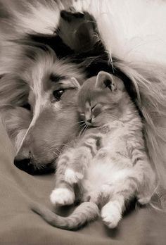 Lassie and Laddie... only the compassionate and sincere may appreciate the love that these two warm hearts feel together in peace.
