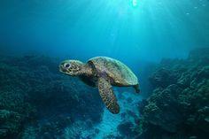 .#turtle www.flowcheck.es Taller de equipos de buceo #buceo #scuba #dive