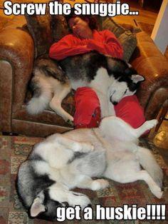 Snuggie with a #Husky!