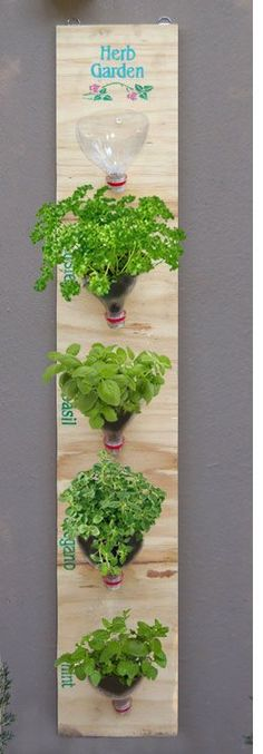 DIY herb gardens. Cut the soda bottle or any plastic bottle with a cover.  Turn upside down; attach to board.  I'm thinking of leaving the cover to the bottle on; punch in a few holes to drain excess water, but not have the soil drain out also. And even better if you can make wholes in the board so you only see the plants!!!!
