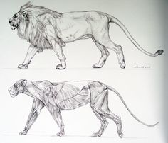 animals real and imagined - Google Search