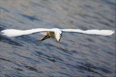 Flying by chenxiaochun123 #animals #animal #pet #pets #animales #animallovers #photooftheday #amazing #picoftheday