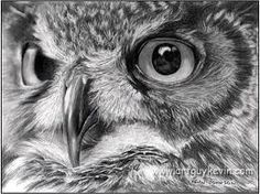 guy kevin art owl - Google Search