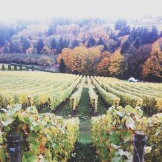 oregon wine country  .. love to go do it again!