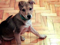 Dogs,Perros,dog,Friends,fotografia,photography.