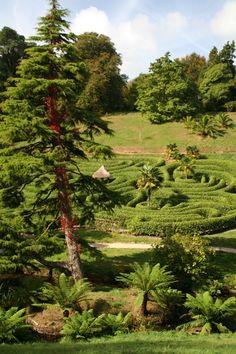 Glendurgan Garden, The Maze  Cornwall