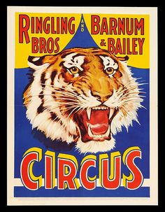 animal poster, circus, classic posters, free download, free printable, graphic design, printables, retro prints, vintage, vintage posters, vintage printables, wildlife, Ringling Bros and Barnum & Baliey Tiger Circus Poster - Vinage Circus Animal Poster
